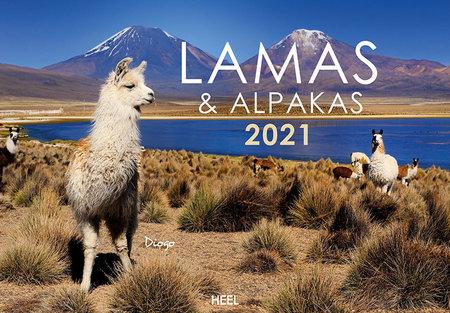 Kalendercover Lamas und Alpakas 2021 | Heel Verlag
